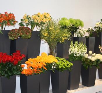 Nys Fleurs Barvaux Durbuy