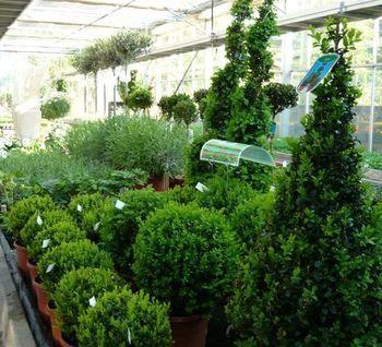 Nys Fleurs - Centre de jardinage
